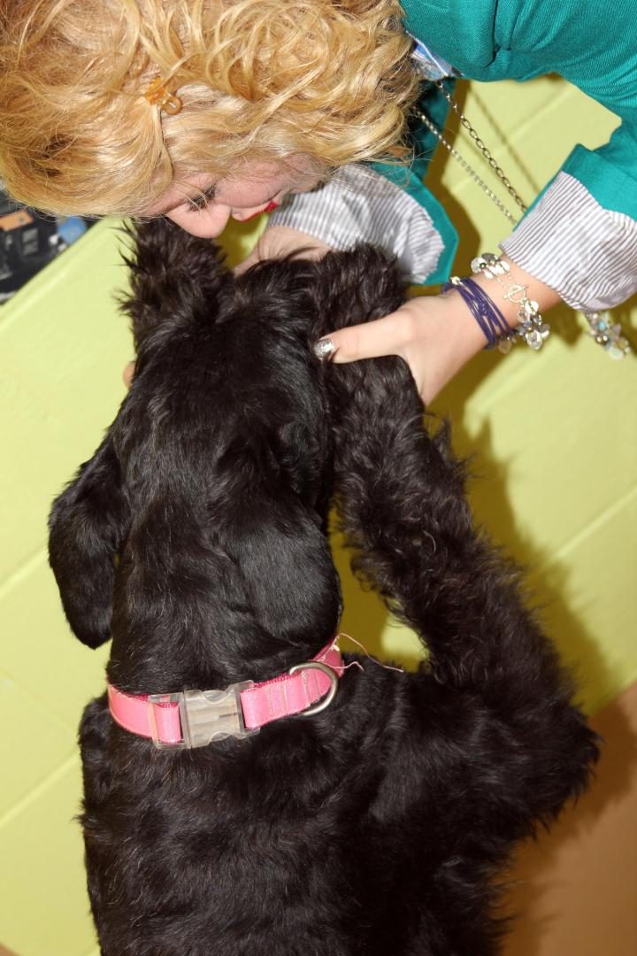 Love my Giant Schnauzer, Ziva! Sappy dog momma moment: Ziva holds the key to my heart:)