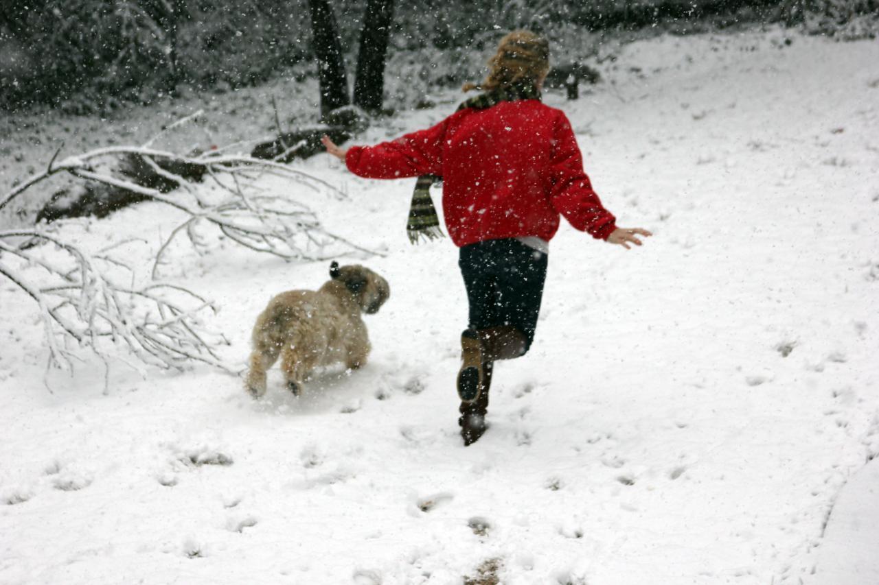 La la la! Mattie and the VIP frolicking in the snow.