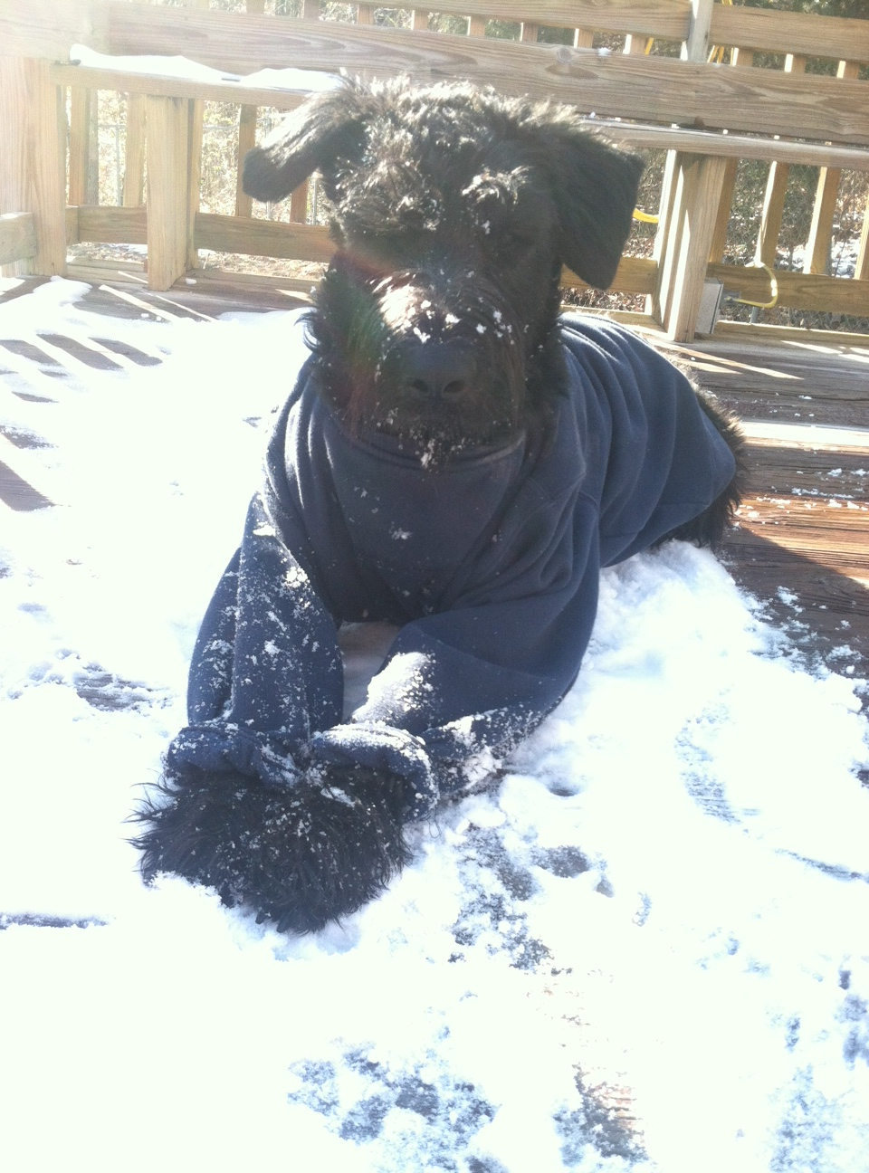 Ziva is a snow baby rather than a snow bunny *wink*