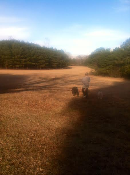 Ziva (Giant Schnauzer), Mattie (Soft Coated Wheaten Terrier), and the VIP taking a walk in the pasture. Ahh....the fresh air.