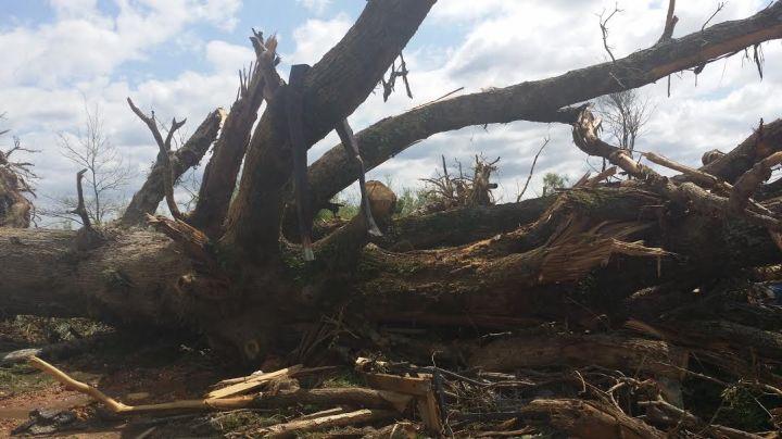 Huge tree down on Tuck Wilkes Road in Noxapater.