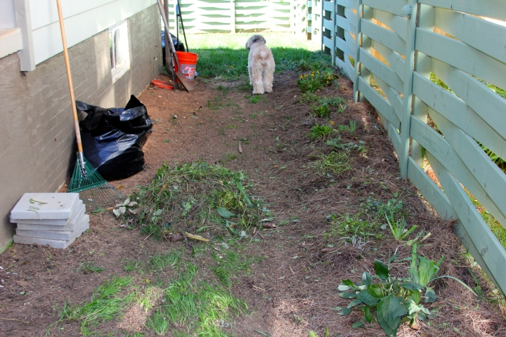 An excessively necessary amount of weeding took place. Also, Mattie decided to pop in for a photo.